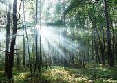 Sun's rays shining through the trees