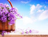 Bluebells spring flowers in a basket