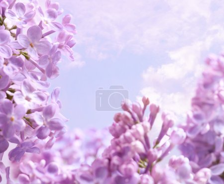 Art Spring lilac flower background