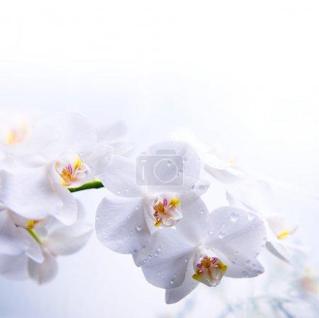 Foto de Flor de la orquídea blanca primavera sobre el agua - Imagen libre de derechos