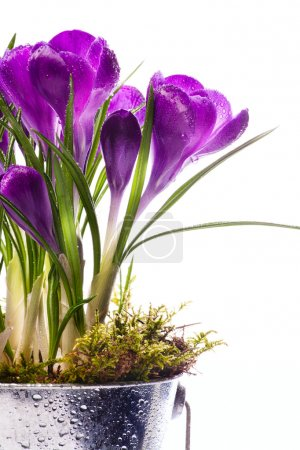 Art Beautiful spring flowers isolated on white background