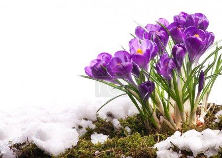 Photo pour Art Belle Pâques Printemps Fleurs isolées sur fond blanc - image libre de droit