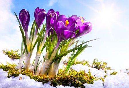 Photo pour Art Printemps fond de fleuriste - image libre de droit