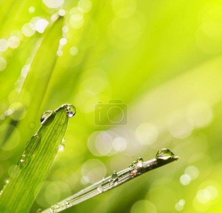 verde, azul, antecedentes, colorido, enfoque, diseño - B9372713