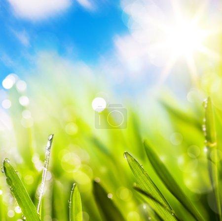 Foto de Resúmenes de fondo verde natural primavera - Imagen libre de derechos