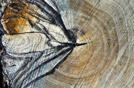 Patterns in a Cut Log