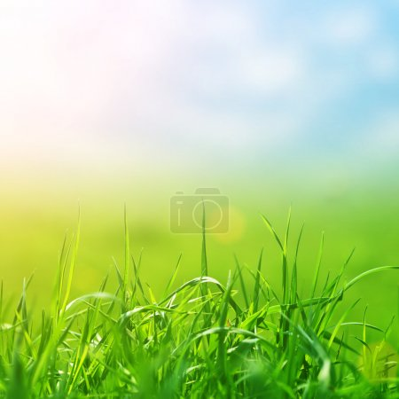 Photo for Spring grass in sun light and defocused sky on background - Royalty Free Image