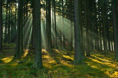 Photo pour Rayon de lumière dans la forêt d'automne - image libre de droit