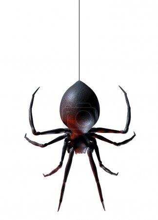 Photo pour Araignée suspendue à son fil isolé sur un fond blanc - image libre de droit