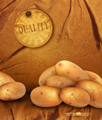 Vector vintage background with sackcloth and potato tubers