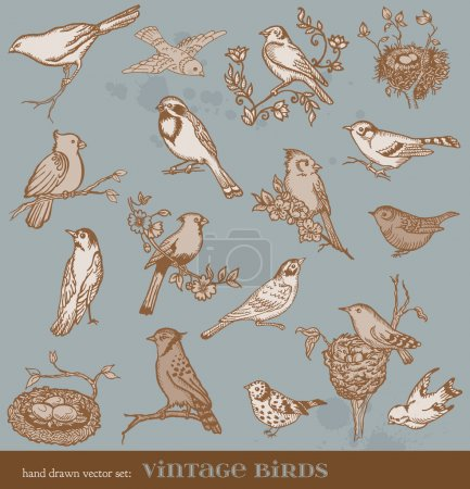 Hand drawn vector set: birds - variety of vintage bird illustrat