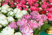 Květiny v několika barvách