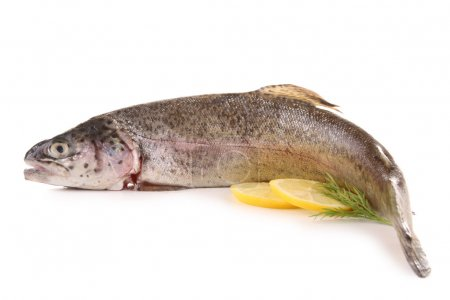 Isolated fresh trout