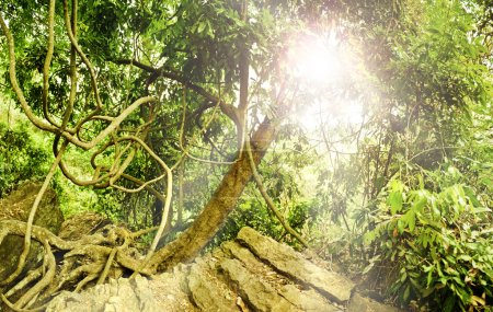 Green wild tropical forest with ray of light