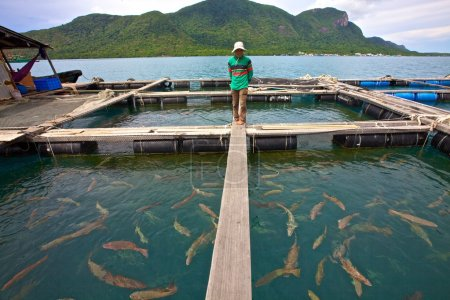 Vietnamese Fish Farmer