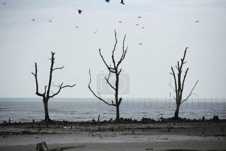 Photo pour Stock image des dommages environnementaux - image libre de droit