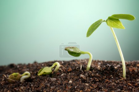 Photo for Stock image of the small plant growing - Royalty Free Image