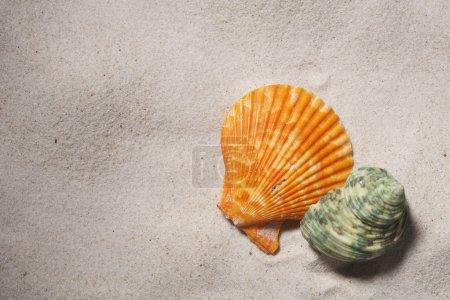 Photo pour Coquillages isolées sur le sable. - image libre de droit