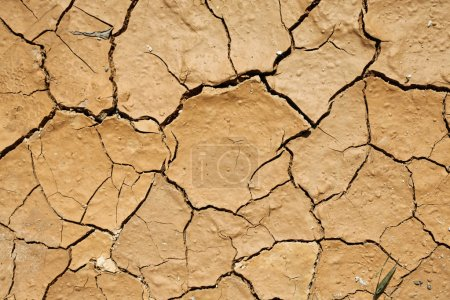 Photo for Dried and cracked earth texture - Royalty Free Image