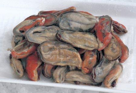 Foto de ISI kupang o mejillones en una bandeja de poliestireno - Imagen libre de derechos