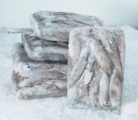 Photo for Ice blocks of squids. - Royalty Free Image