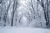Krásné zimní Les