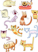 Set of eleven different cats