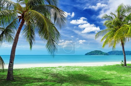 Photo for Green tree on a white sand beach. - Royalty Free Image