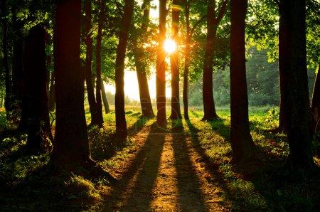Photo pour Verte forêt sur saison estivale - image libre de droit