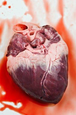 Photo pour Coeur de sang bouchent - image libre de droit