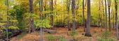 Bear Mountain forest panorama