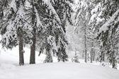 Stromy v lese v zimě na sněhu