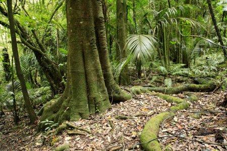 Photo pour Forest - image libre de droit