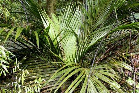 Ferns in dense tropical jungle