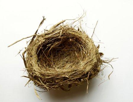 Empty nest on plain background
