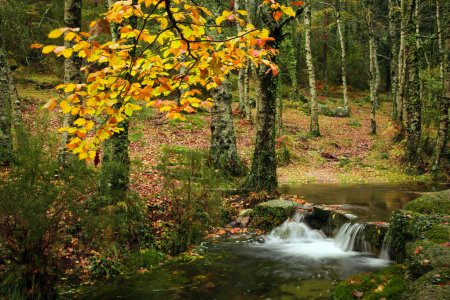 Small autumn river at Geres National Park, north of Portugal