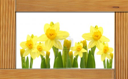 Yellow Daffodils Flowers in a wooden frame.