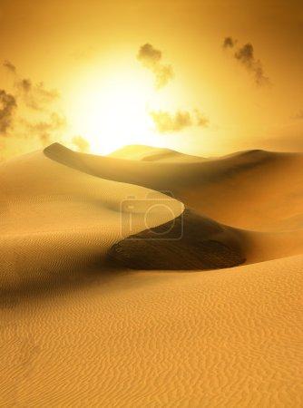 Gold desert. Sunset.