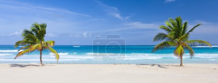 Photo for Two palm trees on the tropical beach, Bavaro, Punta Cana, Dominican Republic - Royalty Free Image
