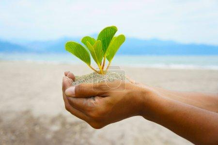 Photo pour Les femmes tenant une petite plante dans ses mains . - image libre de droit