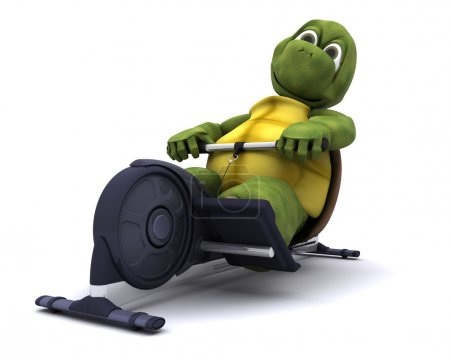 Tortoise training on a rowing machine