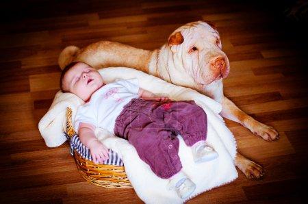 Photo pour Le bébé dort dans un panier et alentours, le chien est assis - image libre de droit