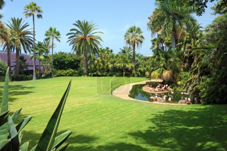 Beautiful park with flamingo on Tenerife island, Canary.