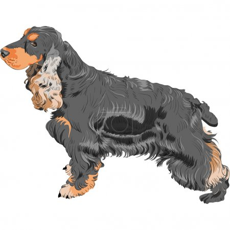 Vector dog black English Cocker Spaniel breed