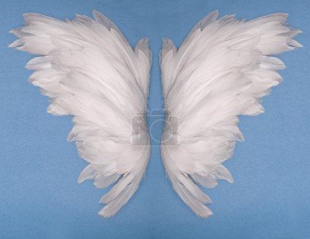 Photo pour Plumes d'ailes sur fond bleu - image libre de droit
