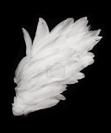 Photo pour Ailes d'ange sur fond sombre - image libre de droit