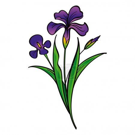 Illustration for Iris - beautiful flowers flora - Royalty Free Image