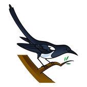 Magpie bird fauna tree
