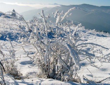 Winter landscape (8)