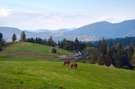 Horses on mountainside.